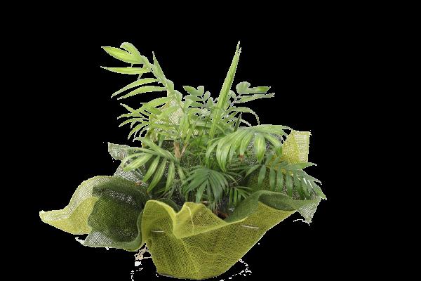 Nursery and Plants